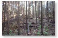 天竜の木材