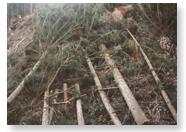天然乾燥させている木材